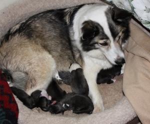 4/2/15 puppies